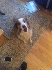 Sat, Oct 21st, 2017 Found Female Dog - Drogheda Street, Collon, Louth (Lost and Found Pets Ireland) Tags: founddogdroghedastreetlouth found dog drogheda street louth october 2017