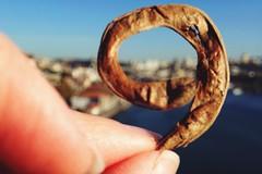Spiral (fred_v) Tags: macromondays spiral
