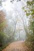 IMG_4062 (Niki.Suppan) Tags: vienna autumn fall october oktober herbst wien wanderung wandern leopoldsberg hügel herbstfarben fog nebel nebelig wanderpfad stadtwanderweg canon eos ef 2470mm 28 f28 dslr slr spiegelreflexkamera vollformat fullframe 5dii