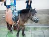 PA224198 (tatsuya.fukata) Tags: thailand samutprakan crocodilefarm animal hourse