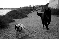 making friends (pepe amestoy) Tags: blackandwhite dogs dof elcampello spain fujifilm xe1 carl zeiss c biogon 2835 zm t m mount