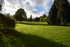 Cheam Park in the Autumn sunshine (James Mans) Tags: nikon d5500 cheam park trees autumn leaves england surrey green 1020 afp 1020mm grass sky field tree landscape