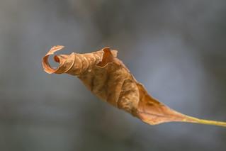 Autumn Spiral