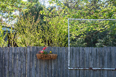 (Jeremy Whiting) Tags: detroit michigan royal oak fence yard suburb city urban suburban vintage bushes backlit light spring wood plants garden net pvc great lakes new topographics composition geometry canon digital color photo green mi oakland county american dreaming