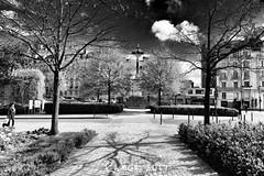 Errance rennaise...#bretagne #illeetvilaine #noiretblanc #blackandwhite #errance #balade #arbres #rennes #nikonfr #nikon #lens #sun #lumiere #ombre (lucrabco) Tags: bretagne illeetvilaine noiretblanc blackandwhite errance balade arbres rennes nikonfr nikon lens sun lumiere ombre