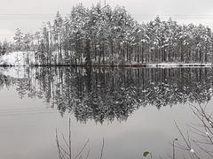 Windstill (konde) Tags: harmaa gray nature tree landscape snow finland winter järvi lake tyyni windstill talvi peilikuva mirrorimage reflection
