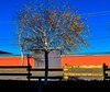 Colors and Lines (Jane Olsen) Tags: tree fence shadow wall orange telephonewires ground outdoor calgary