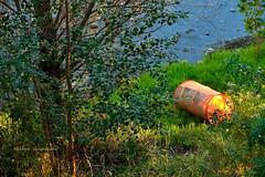 Abandonée sous un dernier  rayon de soleil (Hélène Quintaine) Tags: garonne nasse eau herbe rayondesoleil orange vert fleuve hautegaronne france octobre soir