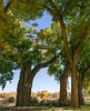 (el zopilote) Tags: albuquerque newmexico elbosque riogrande riograndevalleystatepark landscape trees eos 5dmarkii canonef24105mmf4lisusm fullframe
