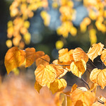 Fall Colors thumbnail