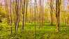 Vertical Lines (Francesco Impellizzeri) Tags: brighton england uk landscape nature forest trees nokia
