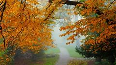 Marburg Schlosspark (wernerfunk) Tags: hessen park landschaft bäume