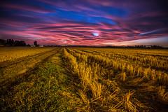 cusago-bareggio (#simon) Tags: campo camp tramonto sunset cusago milano milan colore colorful tramontoinfuocato canon campagna grass sky skyonfire