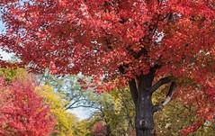 A Fountain of Colors! (karindebruin) Tags: geel usa minnesota minneapolis minnehahafalls indiansummer fallcolors autumn herfst yellow fallfoliage colors kleuren