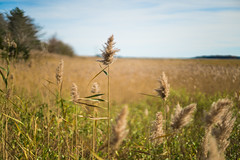 Field (Evan's Life Through The Lens) Tags: camera sony a7rii lens glass vintage adapter canon fd 50mm f14 beautiful outdoors warm orange soft bokeh vibrant color adventure explore