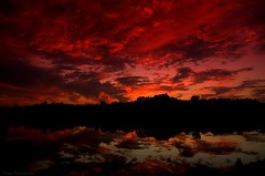 The Fiery End (Captions by Nica... (Fieger Photography)) Tags: forest trees tree sunset sunsets sunlight clouds cloud weather dusk sky skyscape skyline skies water reflections reflection landscape lake colorful colors red dark outdoor quebec canada nature
