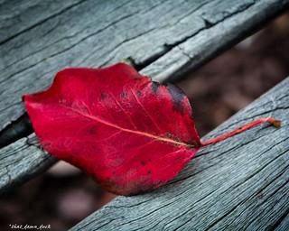 Fall Leaf On Bench