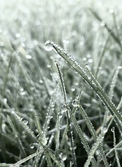 (staceygallagher2) Tags: ireland nature scenic closeup grass drip drops