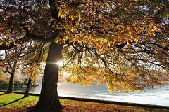 Juste ce soir (nathaliedunaigre) Tags: nature lac lake lakeofannecy lacdannecy duingt hautesavoie france automne autumn fall light lumière marronier arbres trees eau water sunset coucherdesoleil