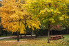Colors of Fall (PhotoDG) Tags: colorsoffall fall season tree leav maple color foliage fallfoliage burnaby deerlake autumn