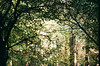 (irina birdie) Tags: kodak analog analogphotography analoguephotography analogue autumn filmphoto filmphotography film flora filmgrain forest light nature naturelovers natureonfilm naturephotography natural