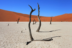 Namibia, Deadvlei Salt Pan (Saleha Ullah) Tags: trees dead namibia africa desert dunes salt pan blue sky sand dry deadvlei