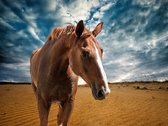 Canelo at the Beach (Joel Grimes inspired) (guillecabrera) Tags: horse equine caballo dramatic beach composite nikon d750 24120f4 texas 1001nights