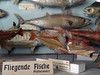 Flying Fishes (Nicote) Tags: house fürstenberg is name swabian noble germany based primarily what today southern badenwürttemberg near source danube river the princely family still residing donaueschingen heiligenberg weitra