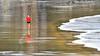 """Mens sana in corpore sano"" (allabar8769) Tags: asturias corredor luarca playa reflejos"