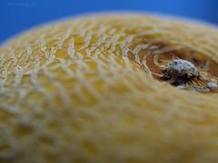 You're one in a melon 🍈 (Kimberly_CH1993) Tags: melon freshmelon freshfruit photographer photooftheday naturephotography macro macrophoto macrophotography newbie