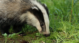 Sniffin' Piglet