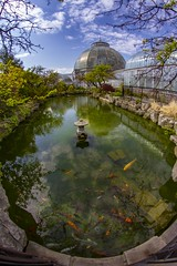 Conservatory (Notkalvin) Tags: conservatory scrippsconservatory koi fish fisheye notkalvin outdoor vertical mikekline pond koipond nature outdoors notkalvinphotography glassbuilding belleisle detroit island michigan distortion bluesky nopeople clouds color upright tall viewfromabove creative different explore explored flickrexplore thankyou