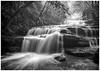 Day Three of the Seven Day Monochrome Challenge. (Eddy Summers) Tags: monochrome leura leuracascades pentaxk1 pentaxaustralia landscape water waterfall longexposure mist rainforest