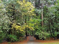 The trail head (walneylad) Tags: westlynn lynnvalley northvancouver britishcolumbia canada park parkland forest rainforest urbanforest woods woodland october fall autumn afternoon trail trees leaves ferns clouds rain wet green yellow brown nature scenery view eastviewpark