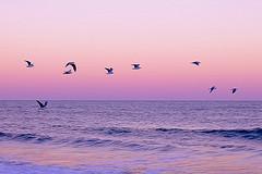 Gaviotas en vuelo (Wal Wsg) Tags: gaviotasenvuelo gulls aves ave birds mar sea water agua atardecer sunset ocaso cielo sky volando flight canoneosrebelt3 argentina miramar dia day paisaje paisajeargentino
