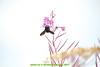 abetone (giordano torretta alias giokappadue) Tags: abetone fiori insetto montagna