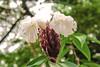 FIORE NELLA FORESTA    ----    A FLOWER IN THE FOREST (Ezio Donati is ) Tags: fiori flowers natura nature macro africa costadavorio grandlaohouarea bianco white rosso red giallo yellow