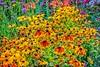 A spot of color (Pejasar) Tags: color plants blooms blossoms flowers garden colorado estespark flower