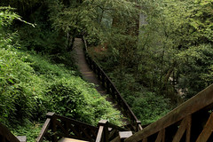 Forest trail - Alishan (Chapo78) Tags: taiwan alishan forest park path hike green nature