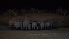 Elephants at the Waterhole (brainstorm1984) Tags: nacht savutimarsh wasserloch elefanten safari savutegamereserve savuti savutesafarilodge savutigamereserve chobenationalpark desertdeltasafaris africanbushelephant night loxodontaafricana afrikanischerelefant botswana waterhole elephant wildlife elephantidae savute afrikanischeelefanten highiso elephants africansavannaelephant savutichannel africanbushelephants elangeniafricanadventures elefant africansavannaelephants