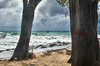 Red Line Spells Danger (Le monde d'aujourd'hui) Tags: manchineel tree trees poison danger line sea barbados storm redline huriricainemaria strom ocean atlantic carribbean waves red