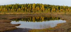 Sunset light - Autumn colours (talaakso) Tags: attributioncreativecommons auringonlasku creativecommons finland finnishbog heijastus herbst lampi solnedgång sunset tammela terolaakso torronsuo torronsuonationalpark torronsuonkansallispuisto waterreflection autumn autumnautumncolours bog fall fallcolors finnishforest höst höstfärger kansallispuisto kärr lightandshadow maisemakuva mire myr myrmark naturelandscape naturepanorama panoraama panorama peatland pond reflection ruska suo syksy talaakso valojavarjo tavastiaproper fi freeforcommercialuse