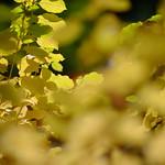 Début d'automne. thumbnail
