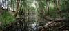 Crawford River (dustaway) Tags: landscape streamscape crawfordriver australianrivers riparianarf pool river trees midnorthcoast nsw australia australianlandscape