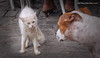 (699/17)  De perros y gatos (color) (Pablo Arias) Tags: pabloarias photoshop photomatix capturenxd cuba lahabana mascotas animales perro gato