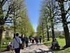 Volkspark Trees