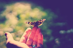 summer.greetings (_andrea-) Tags: sony alpha 7m2 50mm f14 planar14 mount objektiv outdoor butterfly nature wonderful moment