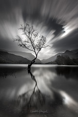 The Lone Tree (Gareth Mon Jones) Tags: tree black white longexposure clouds lake reflections