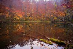 Autumn Pond (moaan) Tags: towada aomori japan jp lake pond tsutanuma surface reflections autumn fall autumncolors fallcolors growth red nature naturephotography travel travelphotography travelogue iphone iphone5 iphonography utata 2017