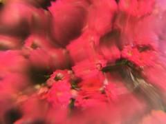 rush hour (meeeeeeeeeel) Tags: iphone iphoneography flowers plasticfilter opticaleffects optics filter experimental blurry surreal abstract